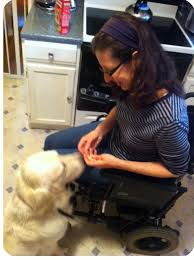Training service dog for use with wheelchair
