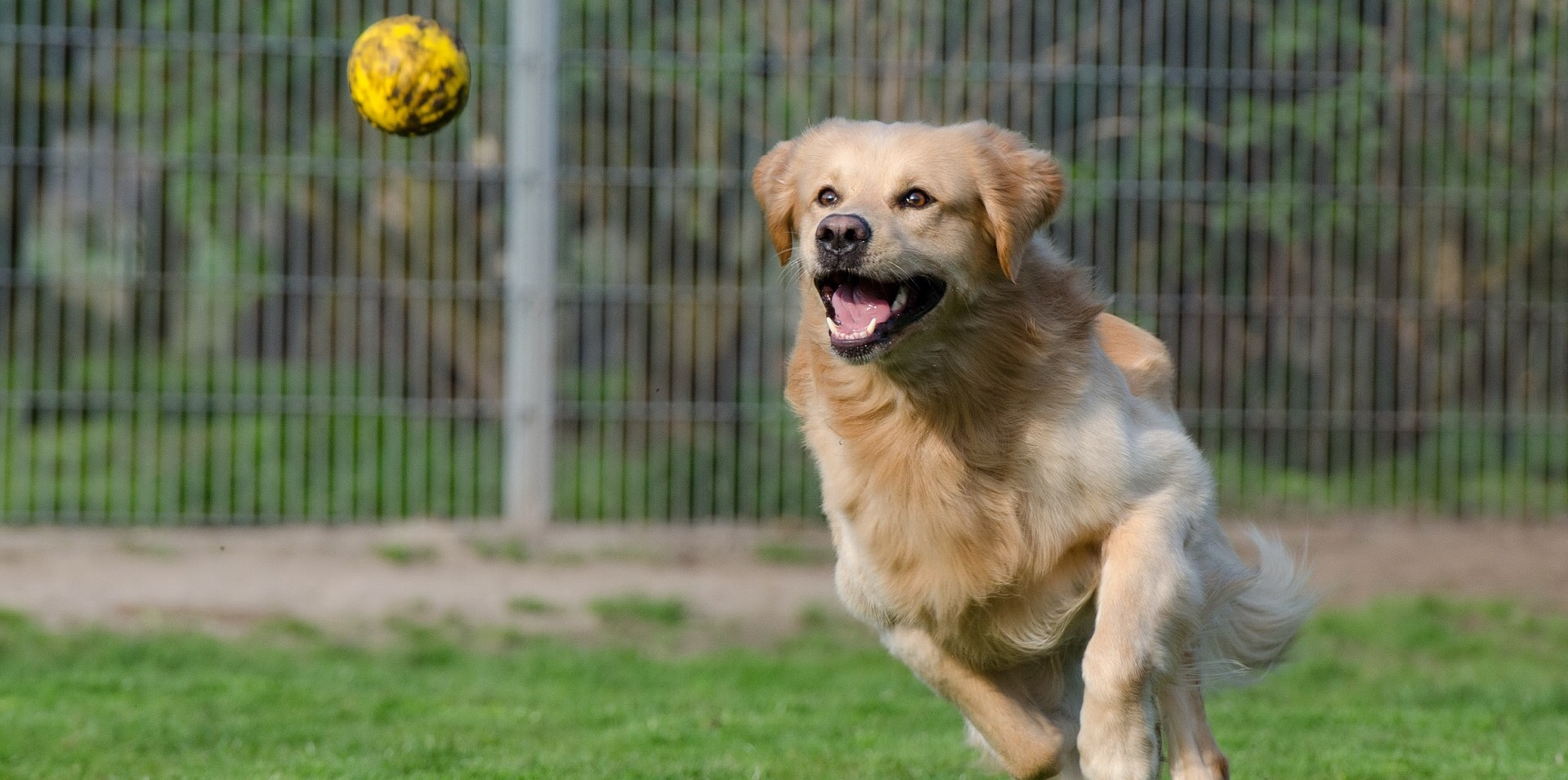 Why Pawsitivity loves positive reinforcement training.