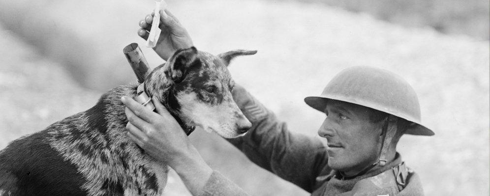 British helper dog