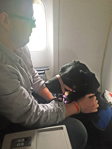 Flying with a service dog