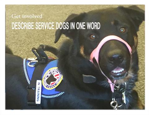 Describe Service Dogs
