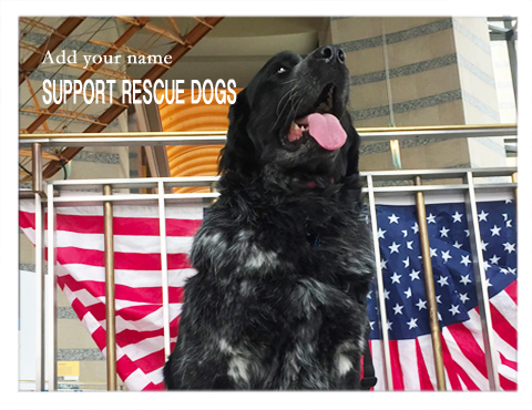 Support rescue dogs