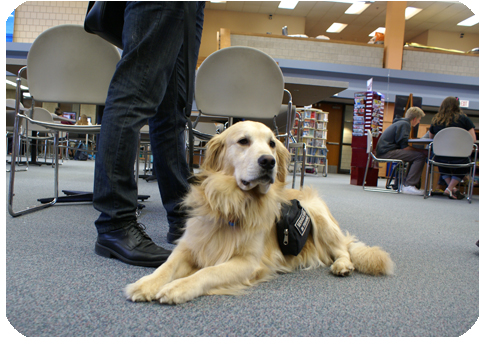Service dog visiting school library
