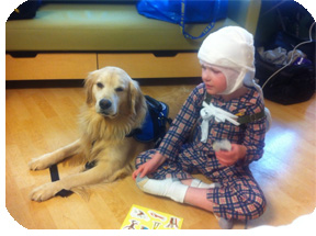Service Dog visiting his boy in the hospital