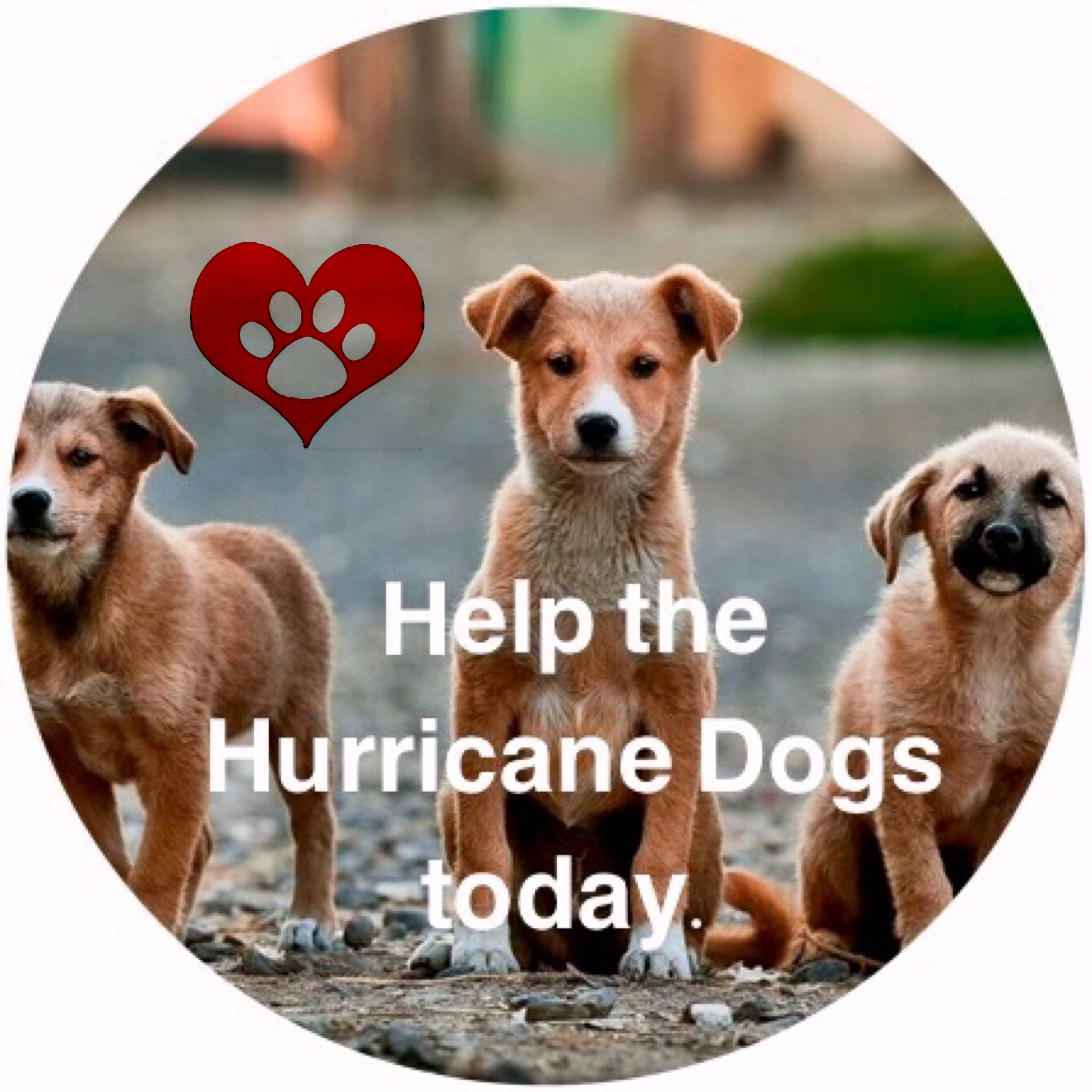 Help save the hurricane dogs.
