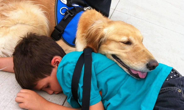 Pawsitivity Service Dogs