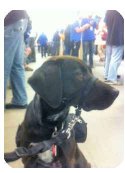 Adhd And Anxiety Service Dog