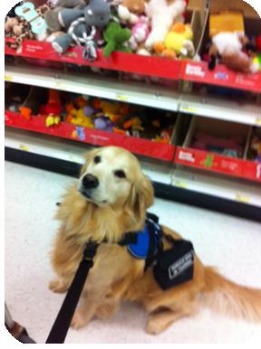PTSSD Service Dog