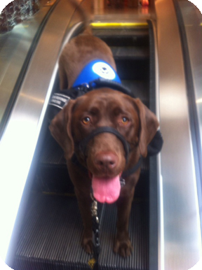 Service Dog on the escalator