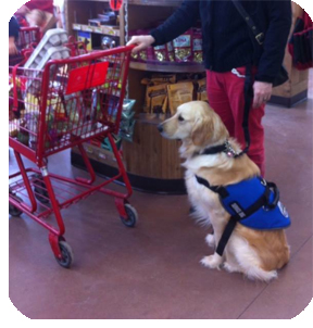 Pawsitivity Service Dog in the grocery store