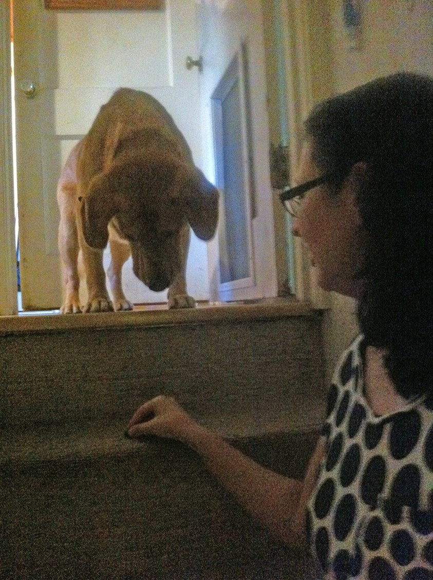 Some rescue dogs have not seen stairs before, but if they are well socialized, they learn quickly
