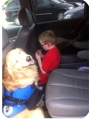 Service dog in a car