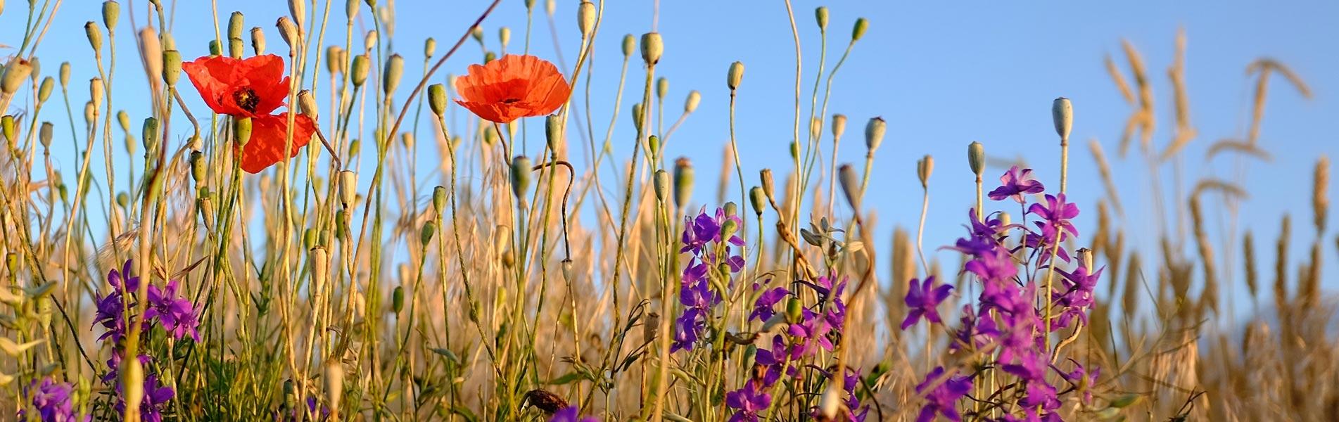 biodiversité-2-1.jpg