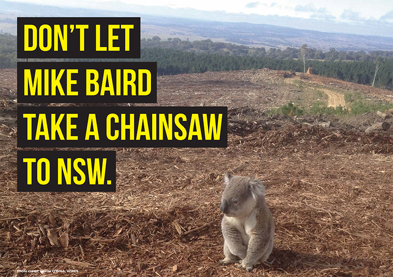 Land_Clearing_-_Koala.jpg
