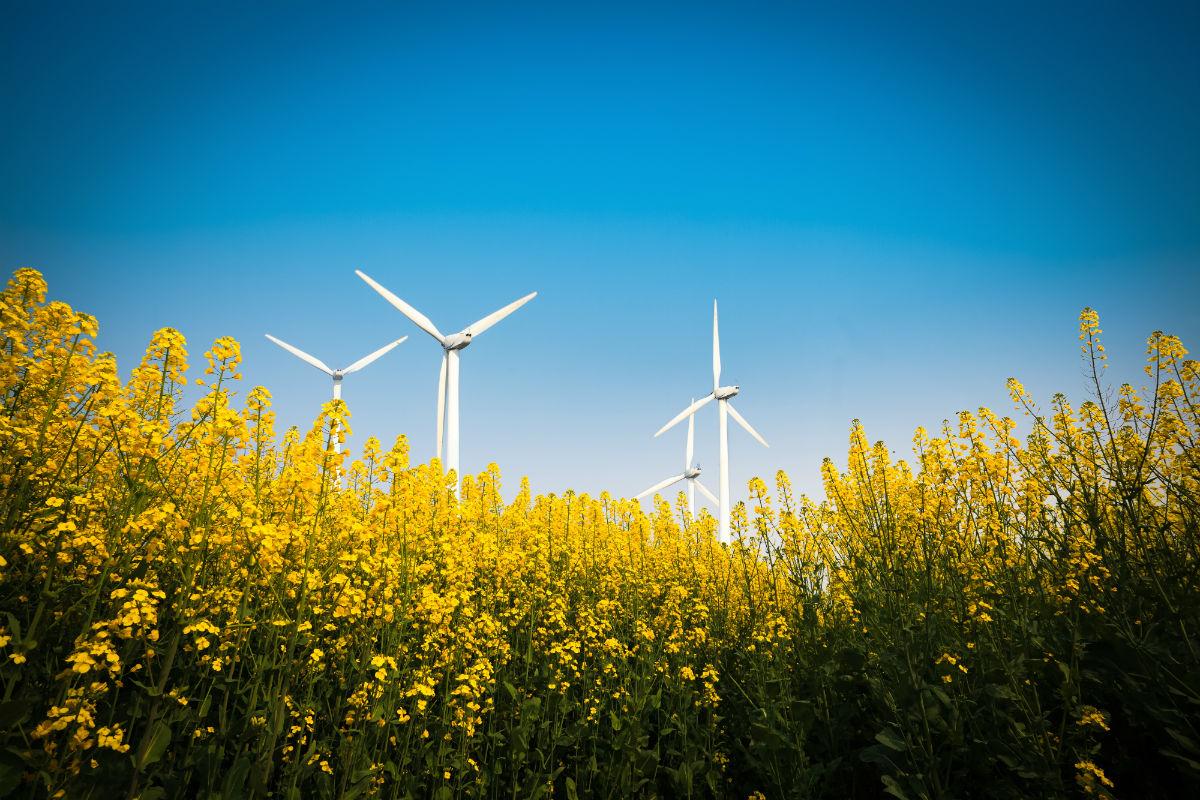 Wind_Farm_1200-800.jpg
