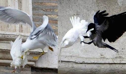 Doves_Image.jpg