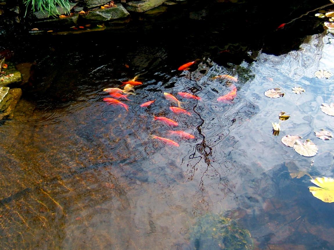 Autumn_Water_Image.JPG