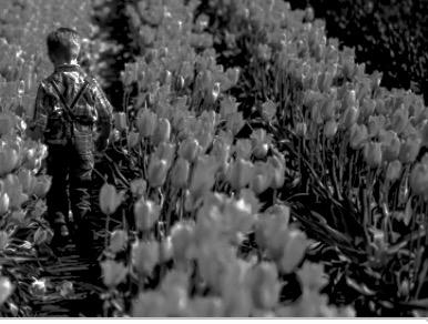 Tulips_Image.jpg