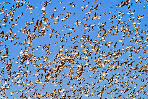 Bird flyway