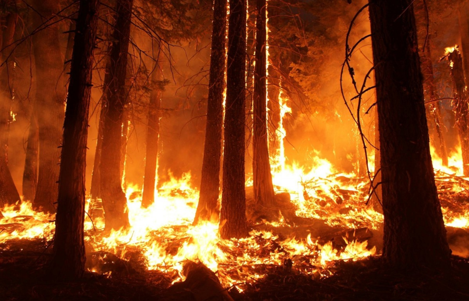Forest_Burning_Free_Copyright.png