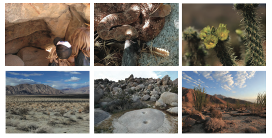 Imagery from the Imperial Valley Desert Museum project, credit Weldon Exhibits.