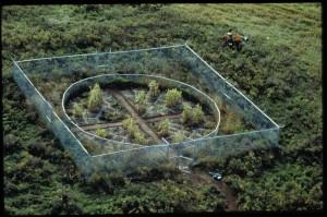 Revival Field, 1991-ongoing, via melchin.org.
