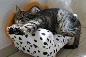 lazy_cat_300.jpg