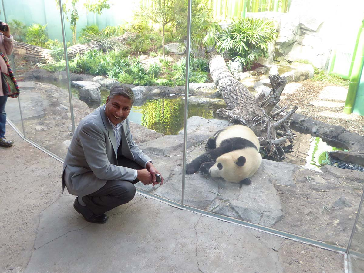 https://d3n8a8pro7vhmx.cloudfront.net/prasadpanda/pages/13/features/original/Visiting_Fellow_Pandas_at_the_Calgary_Zoo.jpg?1525895740