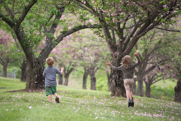 Two of Ginny Sheller's children run through an explosion of Spring petals.