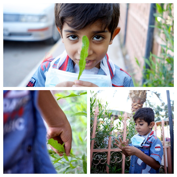A photo collage of Hassin picking and playing with leaves on the hospital grounds in Najaf, Iraq,