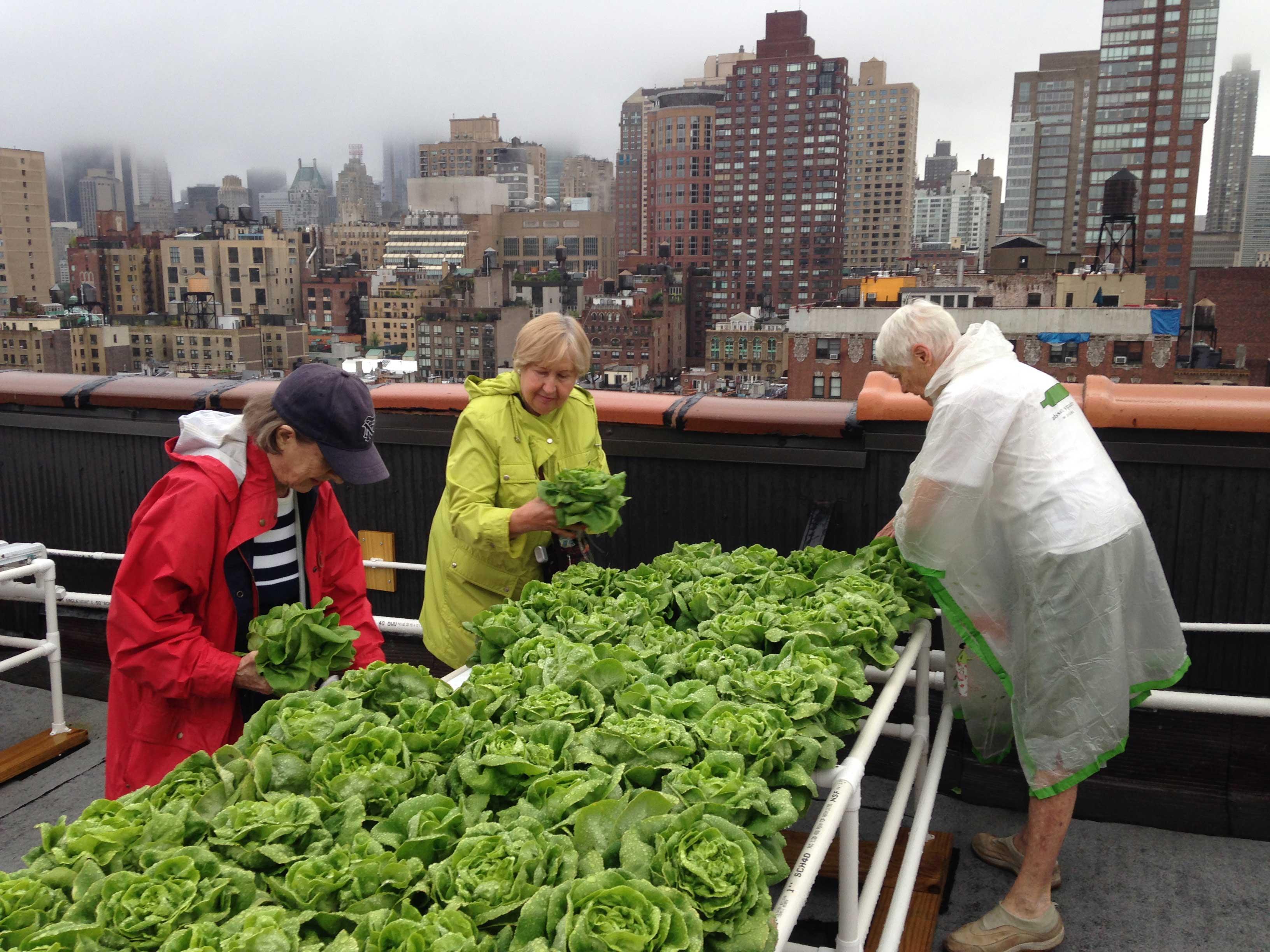 Rooftop-Harvest.jpg