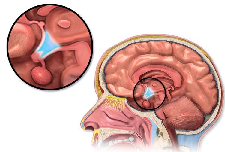 hypothalamus-aging-neurosciencenews.jpg