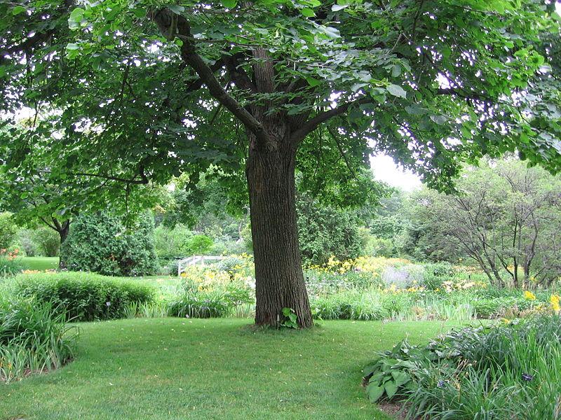 jardin_botanique.JPG