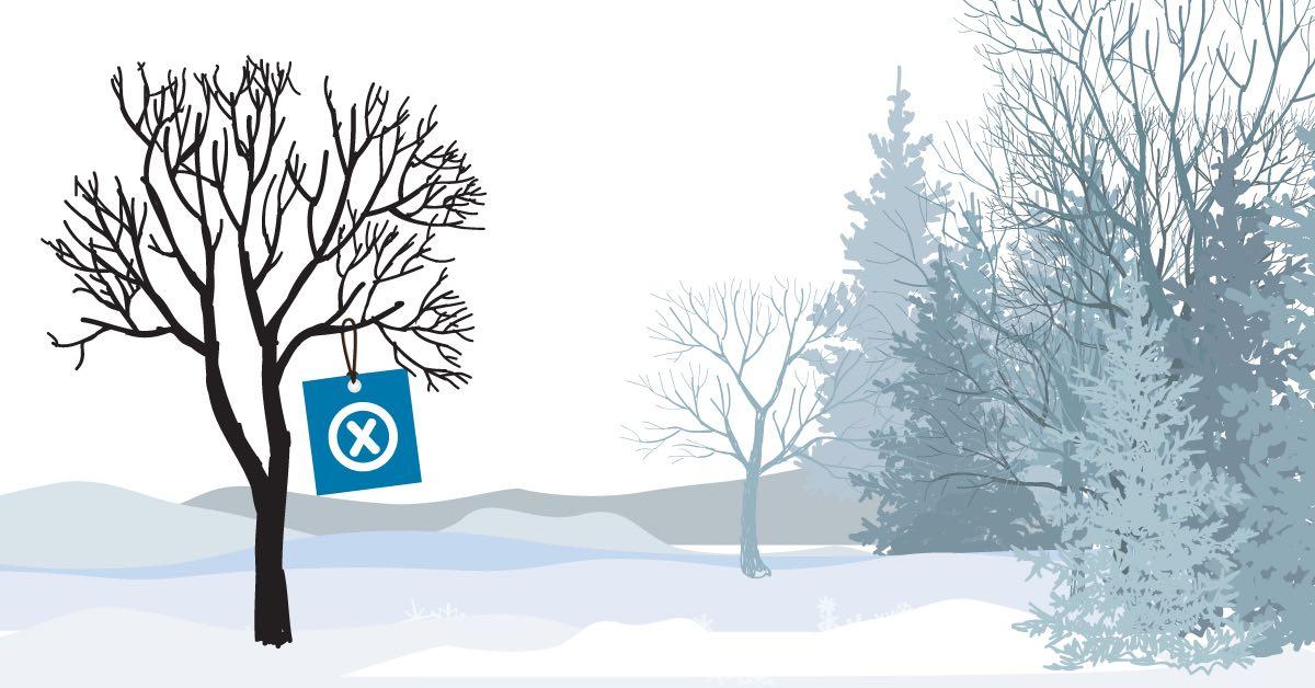 arbre neige sans feuille