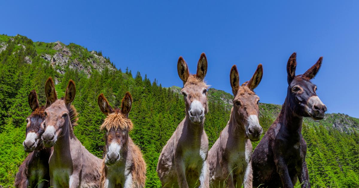 Happy Donkey Hill