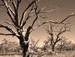 treesdead_0.jpg