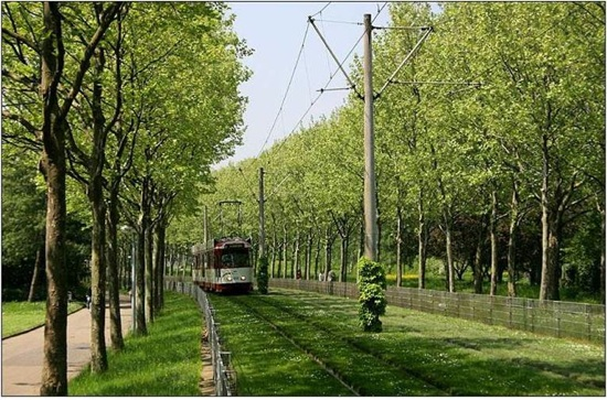 green-tracks_trail_w_trees.jpg