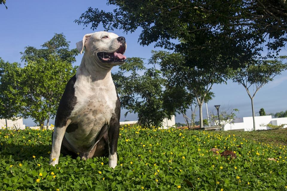 dog-1677292_960_720.jpg