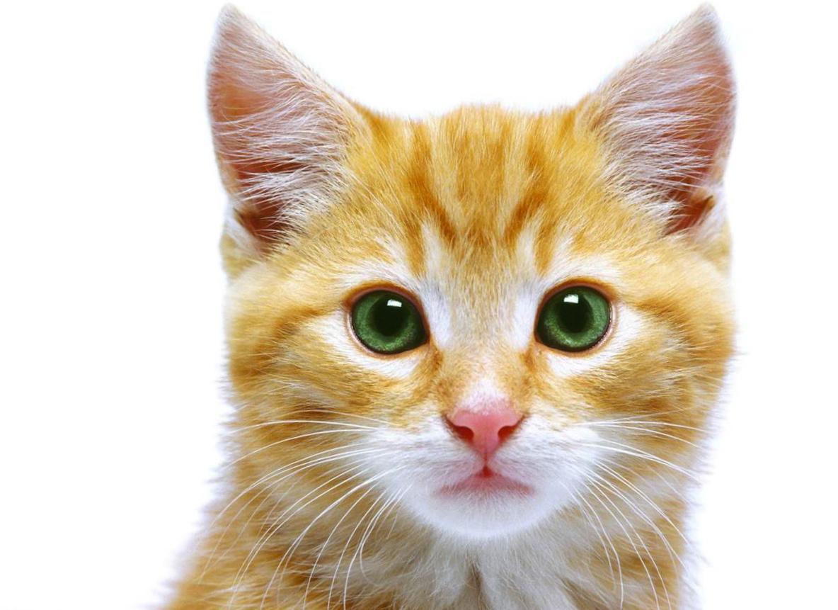 catface1.jpg