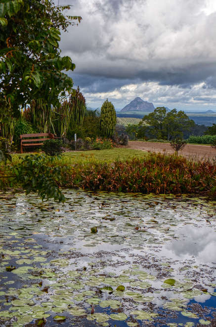 Glass House Mountains From Maleny Botanical Gardens