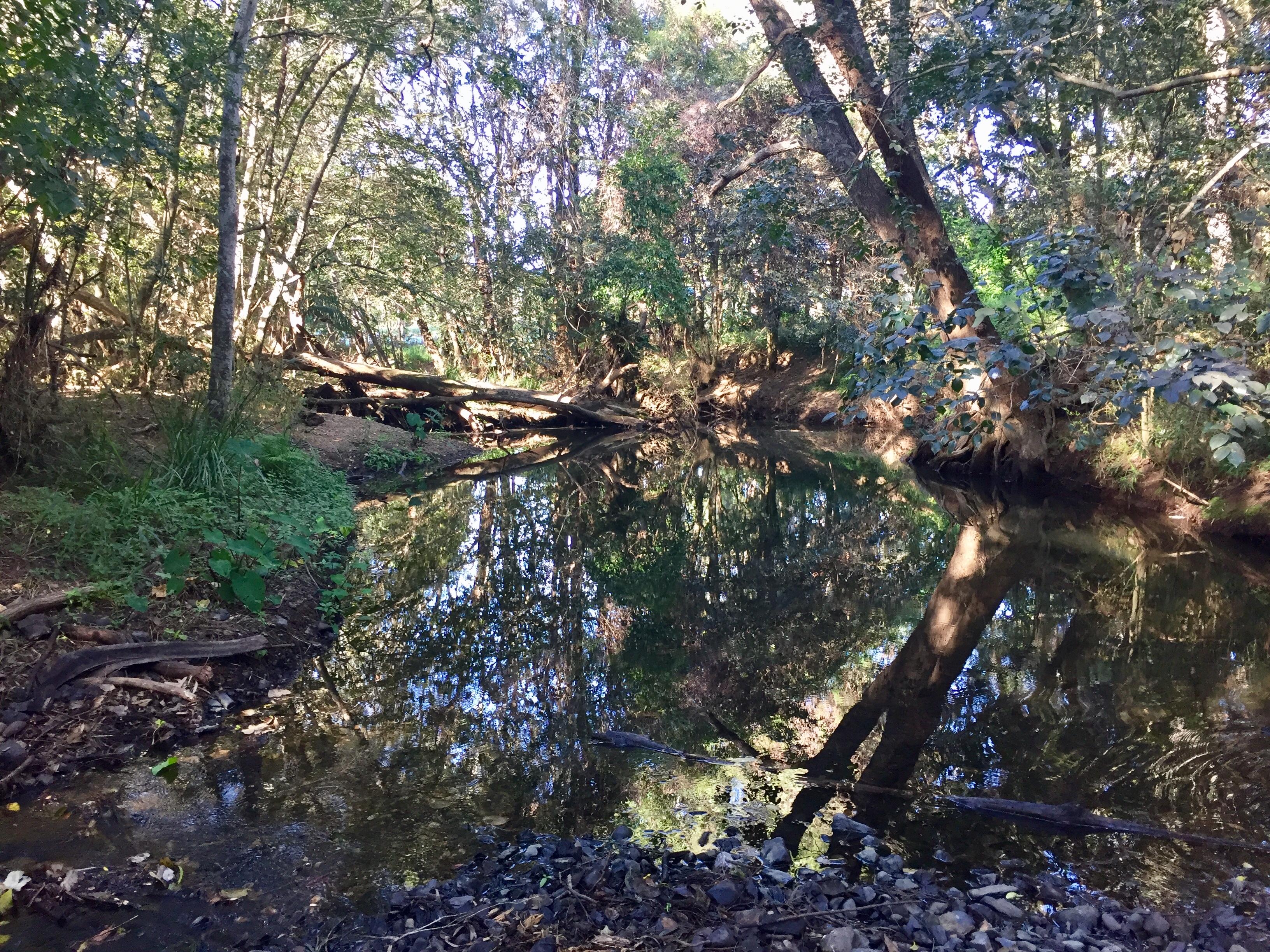 Reflections On A Billabong