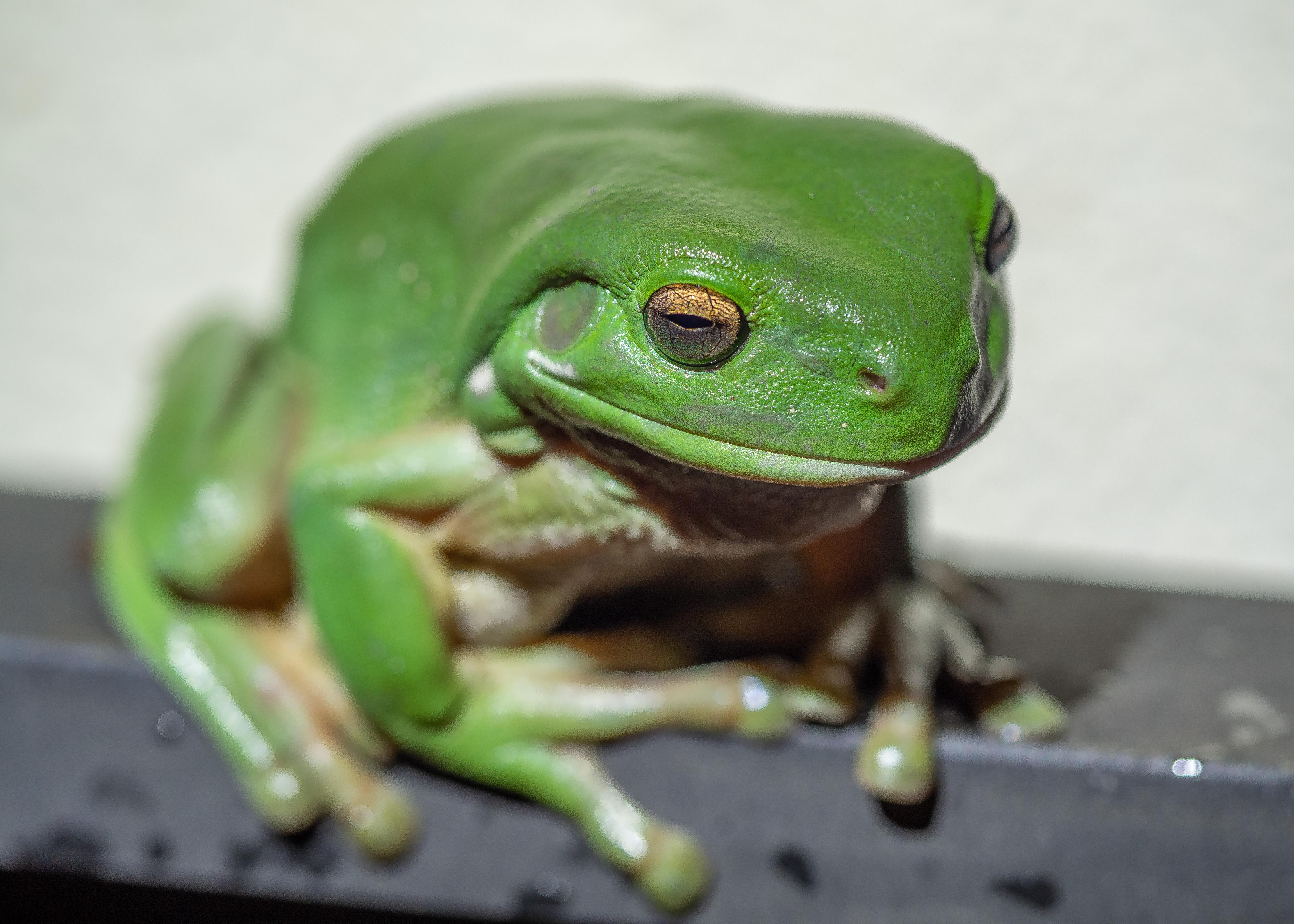 Rooftop Garden Visitor