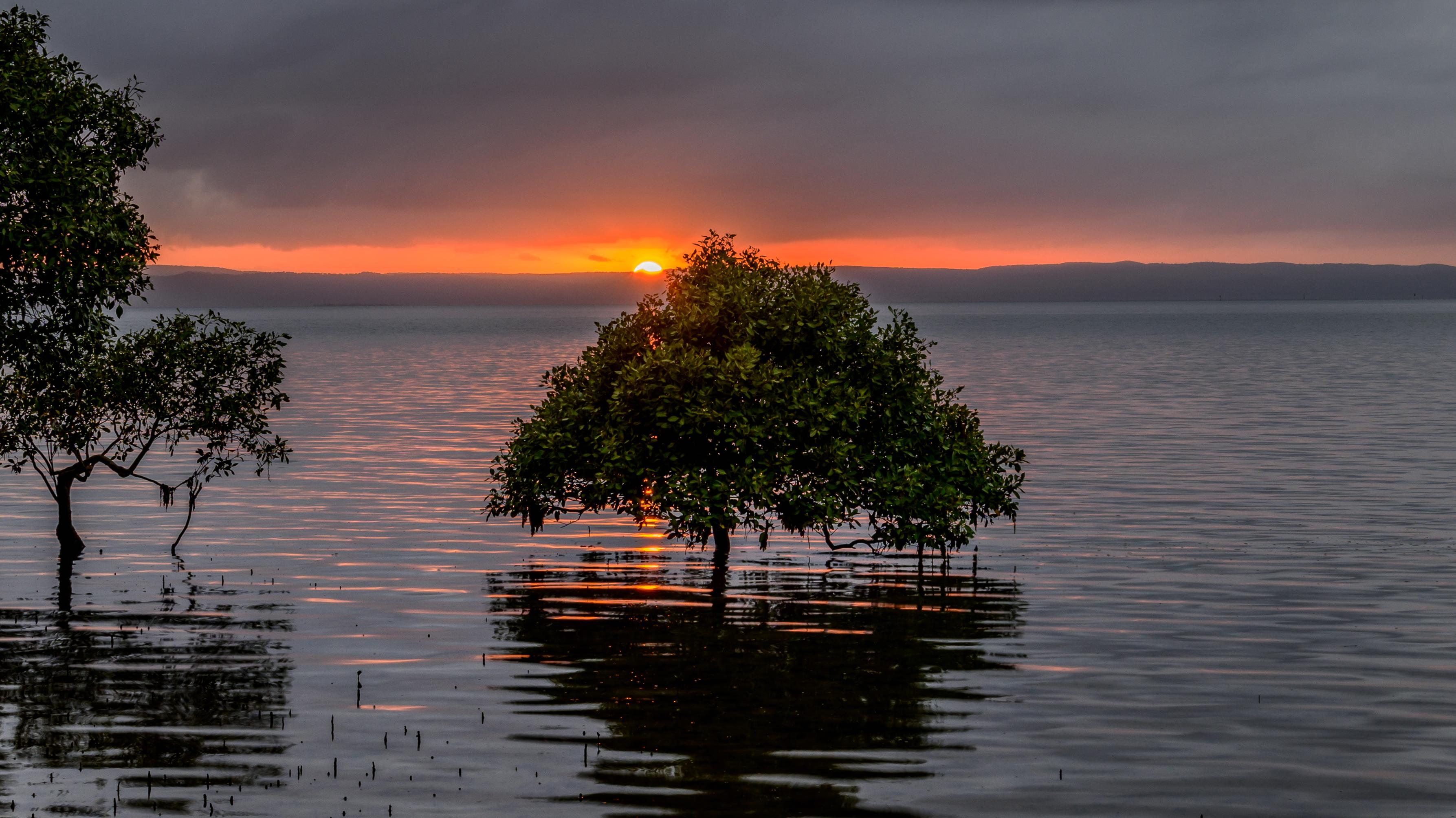 Moreton Mangrove de Light