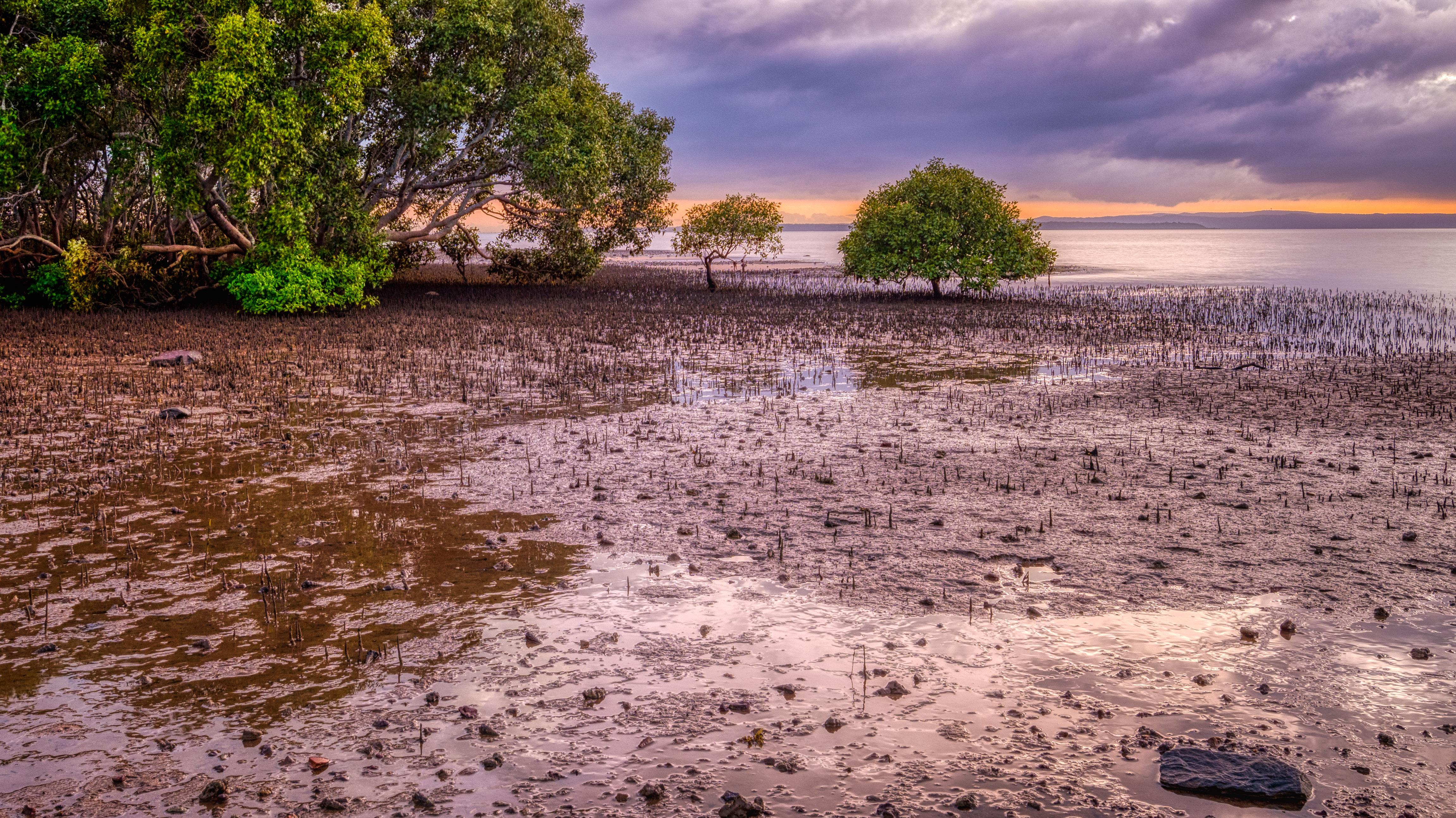 Moreton Bay Breathing