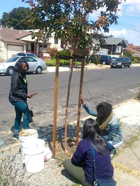 Tree_Care_02.jpg
