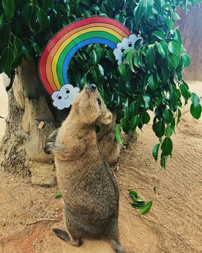30% discount at WILD LIFE Sydney Zoo for Rainbow Families