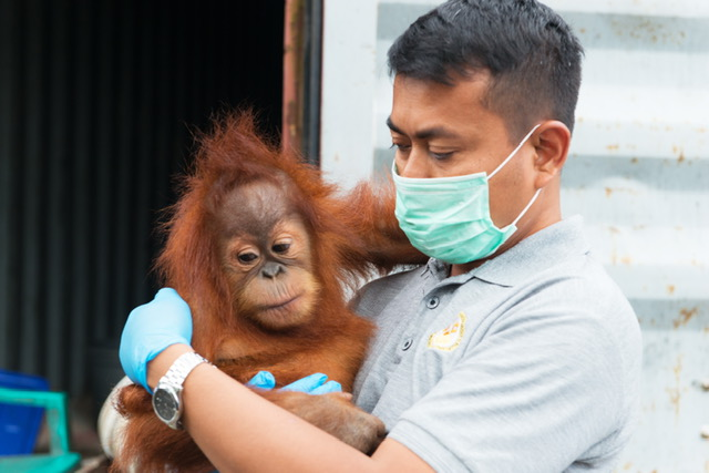 Panut with Orangutan