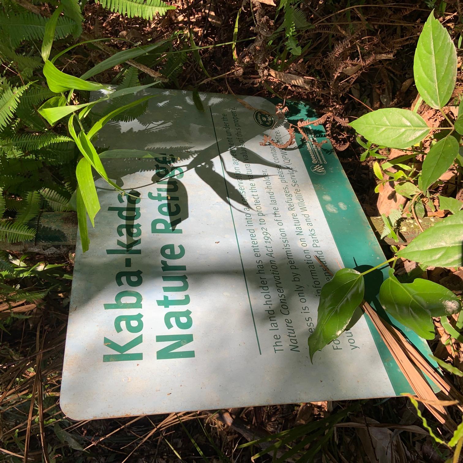 Kaba-kada Nature Refuge in the Daintree Rainforest