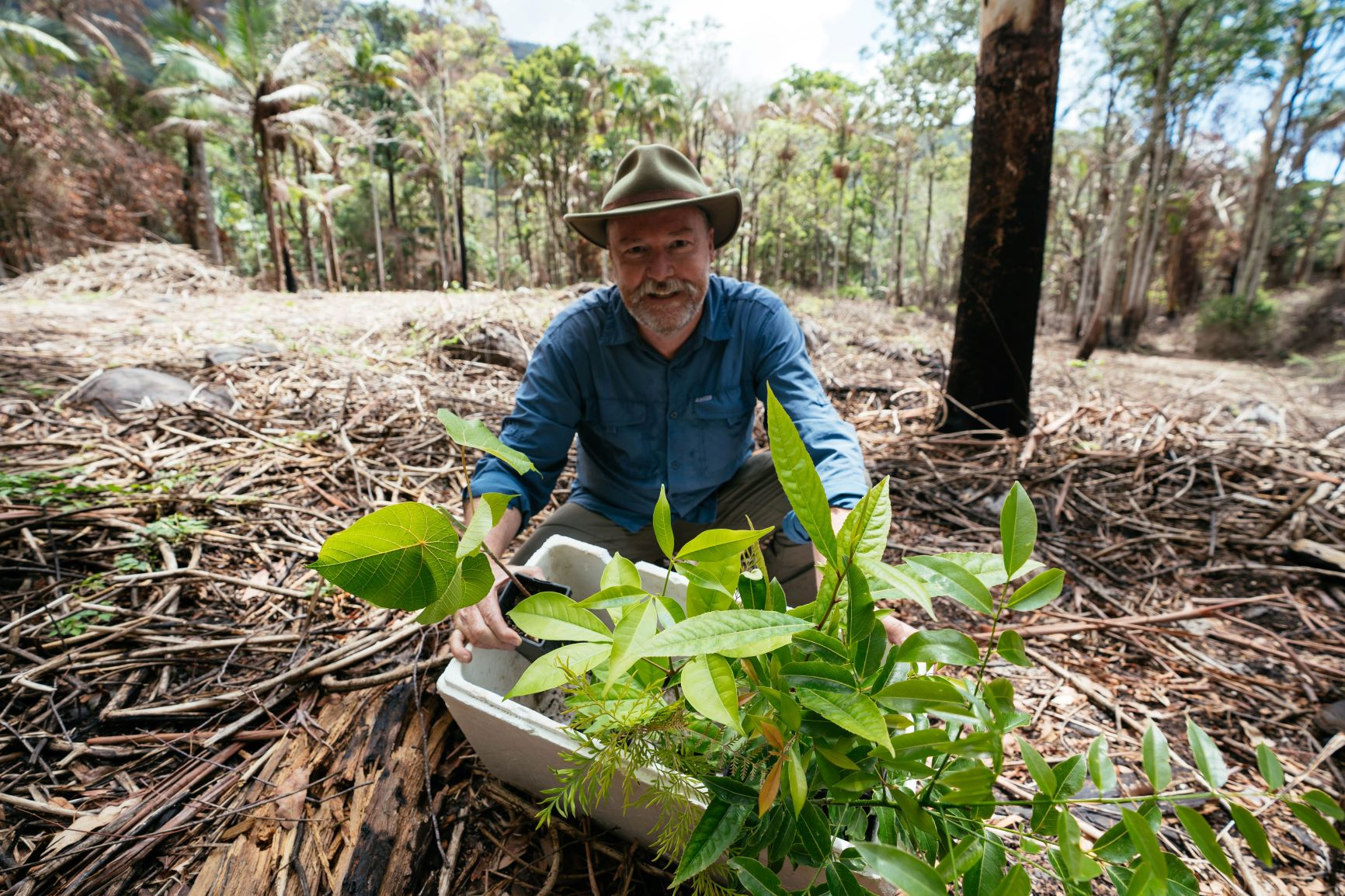 Bushfire recovery, we are ready to replant the rainforest