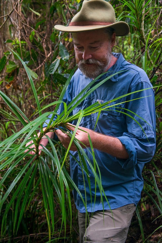 Climbing Pandanus (Freycinetia percostata)